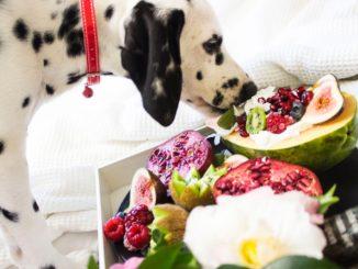 dog heating healthy food